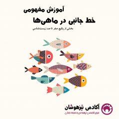 خط جانبی در ماهی